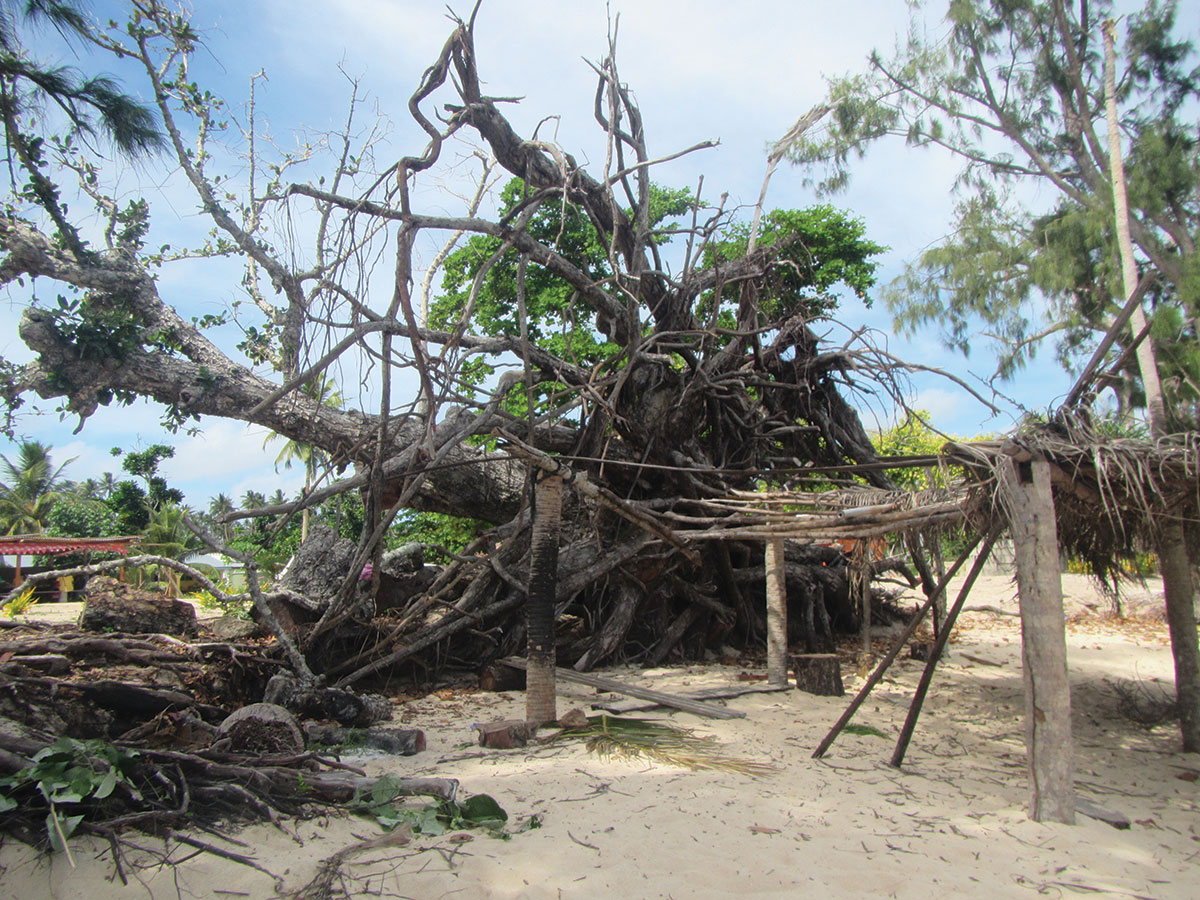Cyclone damage in Nguna Island, uprooted trees