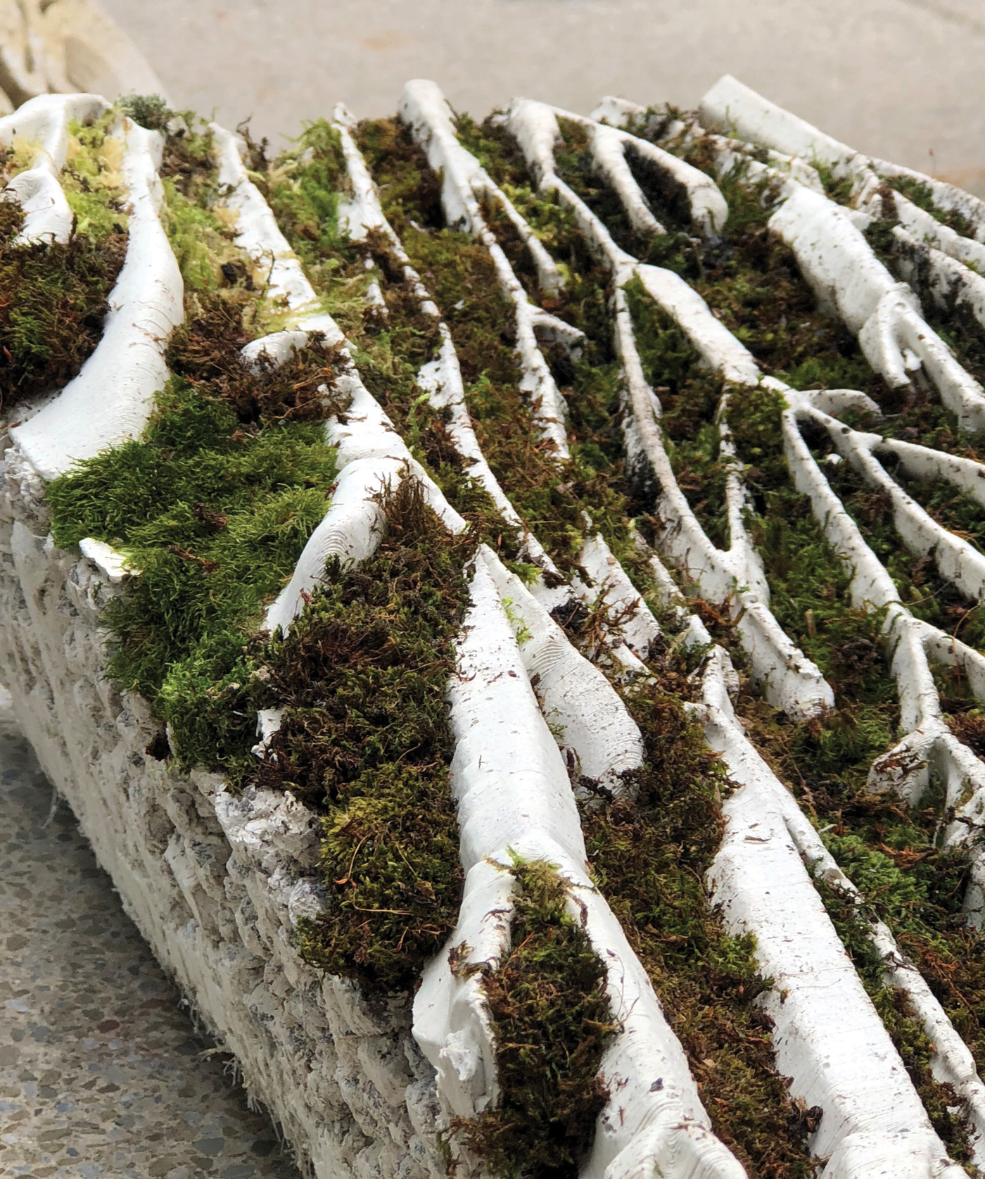 Picture of an architectural bark for maintenance-free green walls