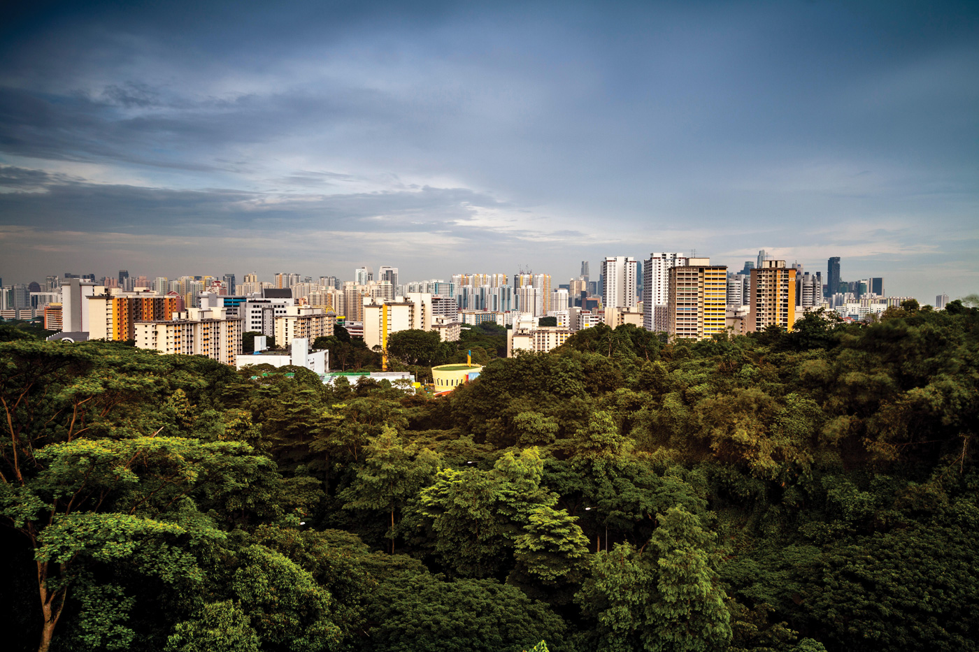 Photo of Singapore with a forest and buildings